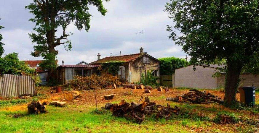 Abattage d'arbres remarquables au Plateau d'Avron Neuilly-Plaisance