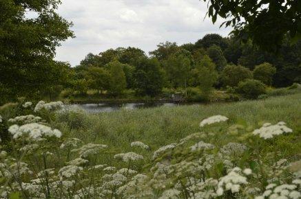 Forêt de Bondy